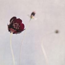 'chocolat flowers' von Priska  Wettstein