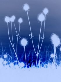 weissblaue sonnen von siegfried schmid