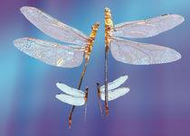 Libellen beim Liebestanz von Reiner Poser