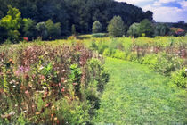 Gardenfieldafter