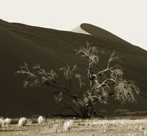 namibia sand dunes by james smit