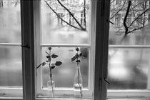 Rosen am Fenster by Markus Breig