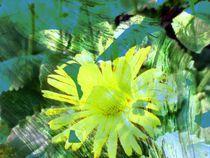 Flor von Manou Osakue