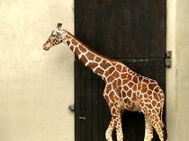 Africanische Giraffe by maren krause