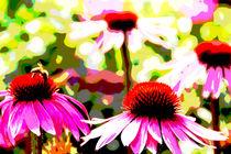 Purpur Sonnenhut 2 von Stefan Pfaff