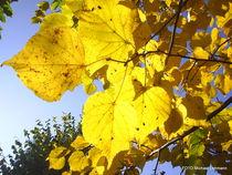 Natur FOTO  Herbst von M. Lehmann