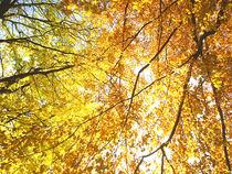 4.Herbst von M. Lehmann