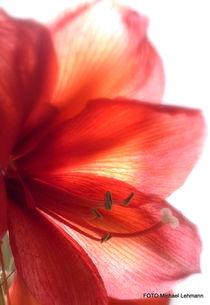 Blüte.2. von M. Lehmann