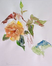 Rose by Traudi Bräuninger