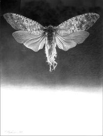 Das Wesen by Peter Heydeck