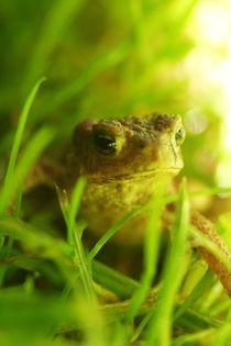 Frosch von Maren Beßler