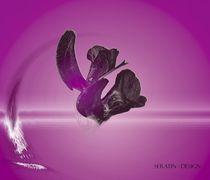 Asian Flower Feeling by Martina Ute Rudolf