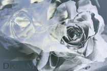 Rosen by Martina Ute Rudolf