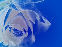 Blauer Diamantenrosenzauber von Martina Ute Rudolf