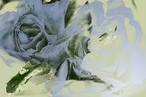 Rose Dreams Green von Martina Ute Rudolf