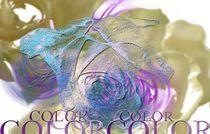 Rose beige  von Martina Ute Rudolf
