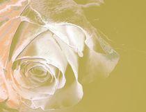 Wunderschöne Blüte by Martina Ute Rudolf