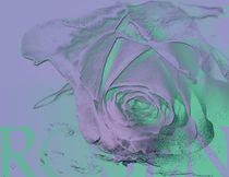 Lila Rosenblüte mit grünem touch von Martina Ute Rudolf