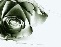 Night Rose  von Martina Ute Rudolf