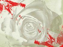Rose Grey Dream von Martina Ute Rudolf