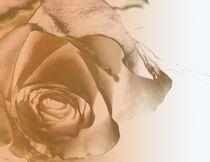 Earth Dream Rose von Martina Ute Rudolf