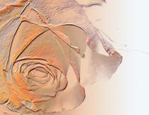Orange Dream Rose von Martina Ute Rudolf