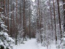 Winterwald von dieter