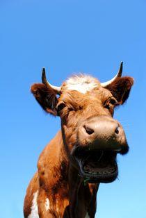 Lachende Kuh von tinadefortunata