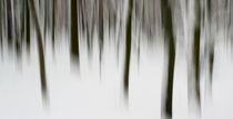 bäume im schnee von marcus paschedag