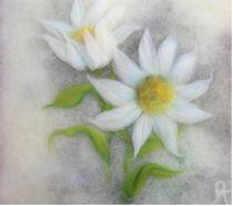Soft Flowers von Birgit Albert