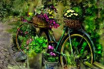 Das alte Fahrrad von Nikola Hahn