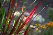 Licht-Gras von Nikola Hahn