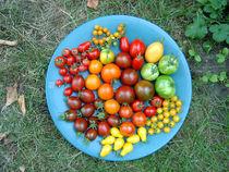 Bunte Tomaten von Nikola Hahn