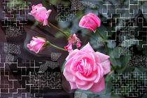 Rosen im Gitter by Nikola Hahn