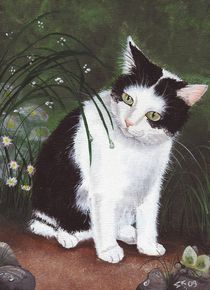 Schwarz-Weisse Katze by lona-azur