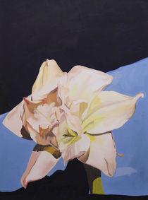 Amarilles by Franziska Ziebarth