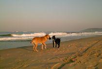 Hunde am Strand in Goa, Indien von Premdharma S. Gartlgruber