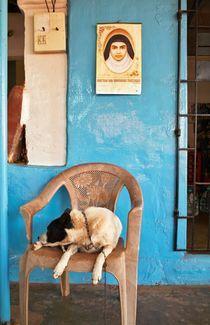 Hund auf Stuhl von Premdharma S. Gartlgruber