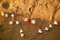 Blumen im Sand von Premdharma S. Gartlgruber
