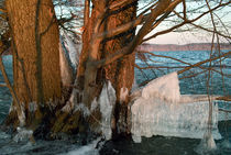 Eis am Baum by Premdharma S. Gartlgruber
