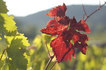 Wein by Marion Elsa Weigeldt