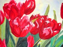 Tulpenfeld by rosenlady
