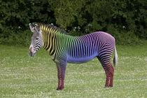 Zebra von Nicklas Byriel