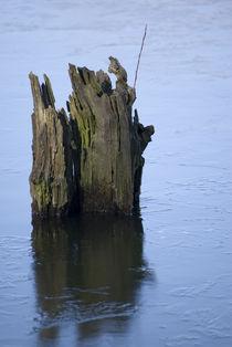 Alter Baumstumpf im Wasser by Dirk Schäfer