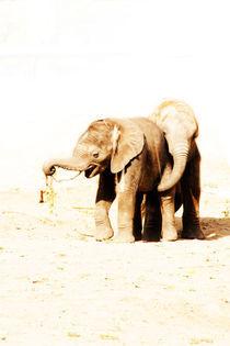 Elefantastisch by Marcus Finke