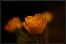 Wenn Rosen weinen von Marcus Finke