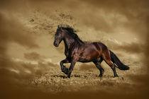 HorseSpeed von Violetta Zajac