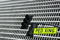 PED XING von Daniel Mikus