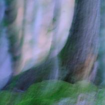 Im Wald I von Martina Weise