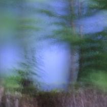Im Wald II by Martina Weise